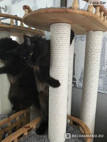 Игровой комплекс для кошек Пушок Неся фото