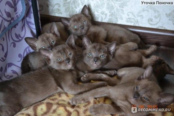 Это его братья и сестрички)