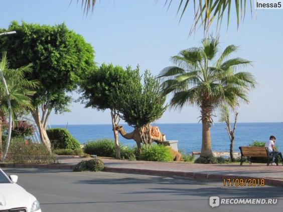 Club Bayar Beach  3*, Турция, Алания фото