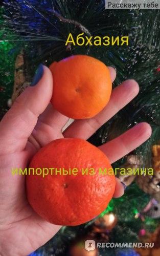 Фрукты Мандарины  фото