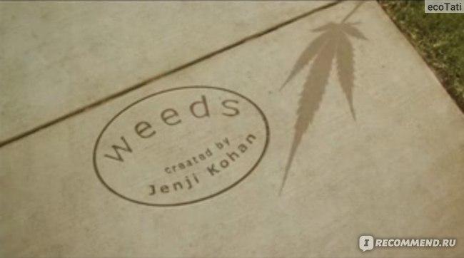 Дурман (Weeds) фото