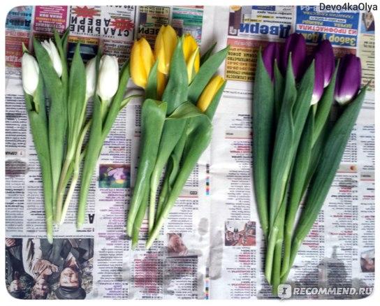 Подготовленные тюльпаны для флористической композиции