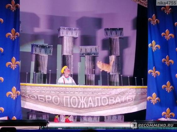 "Театр кошек Куклачева  "" Я-клоун  или Котостройка"", Борисоглебск фото"