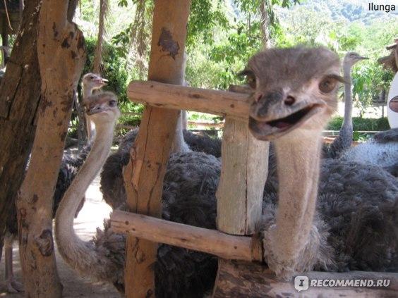 """Тайланд """"открытый зоопарк кхао кео"""" OPEN ZOO KHAO KHE фото"""