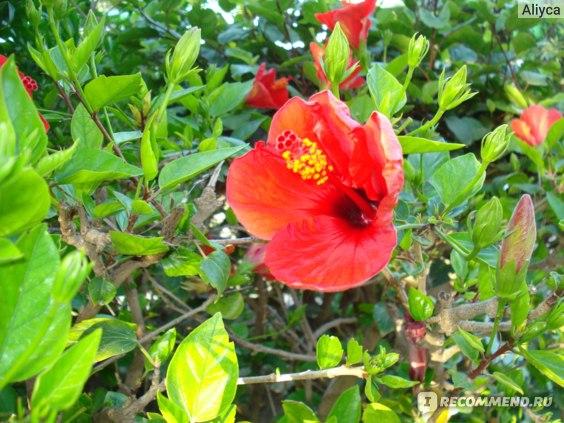 красивый цветок,но трогать нельзя,ядовитый