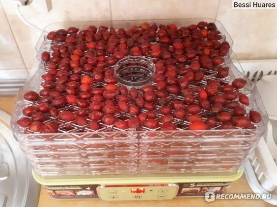Электросушилка для овощей и фруктов MARTA MT-1949 фото