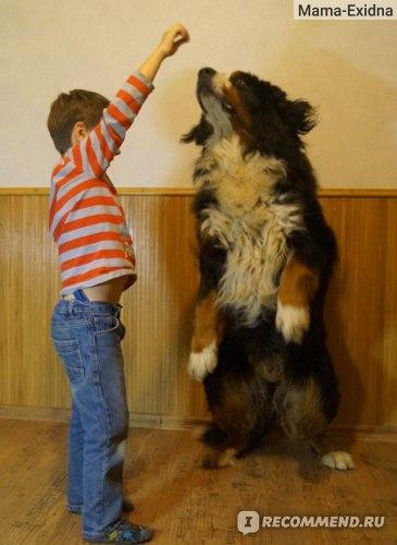 Лакомство для собак Brit дрессировочные снэки (лакомства) фото