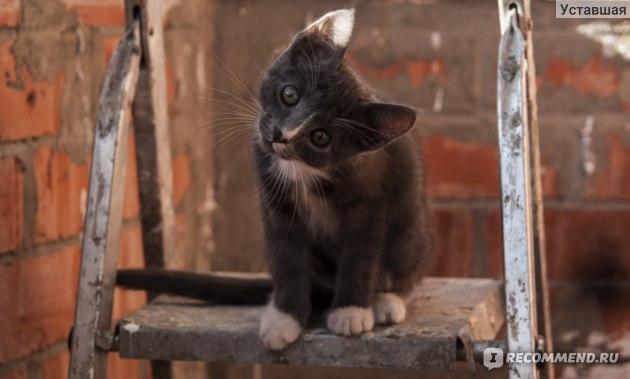 Корм для кошек Wellkiss для котят до 1 года фото