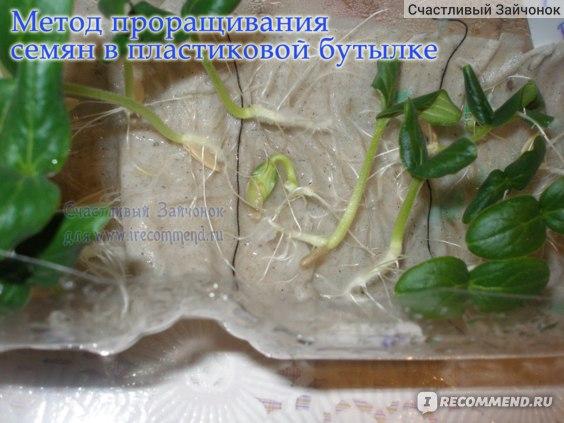 Семена Престиж семена Огурец Эколь F1 Голландская линия фото