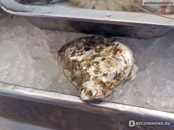 Морепродукты  Устрицы фото
