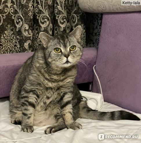 Корм для кошек Farmina Vet Life Renal фото