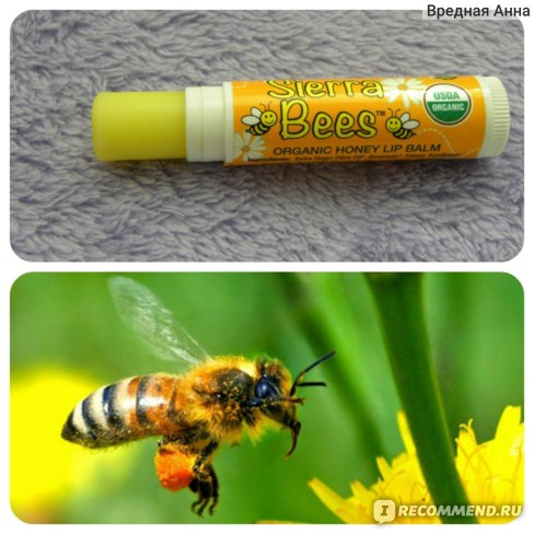 Бальзам для губ Sierra Bees Organic Honey Beeswax Lip Balm with Vitamin E фото