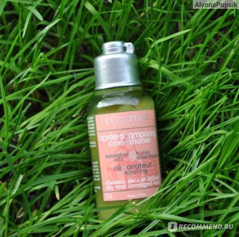 Кондиционер для волос L'occitane Repairing essential 5 oils (Восстанавливающий) фото
