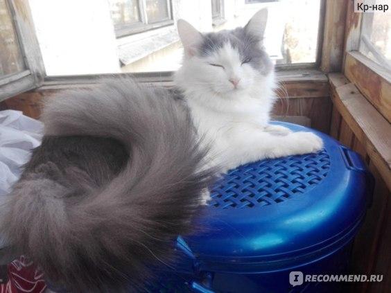 Беспородные кошки и Метисы фото