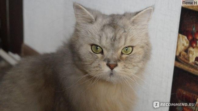 """Консервы для кошек """"Четвероногий  Гурман"""" фото"""