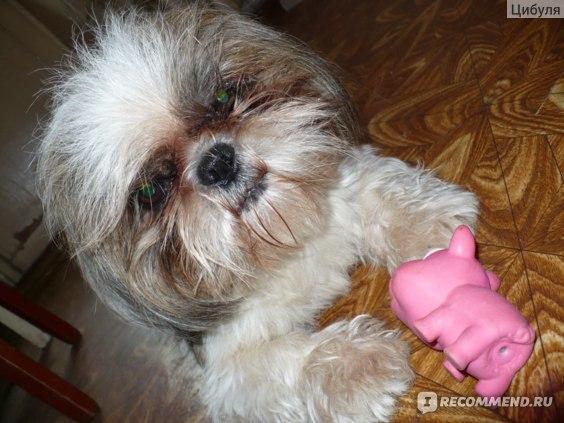 Поводок-рулетка Pet Club фото