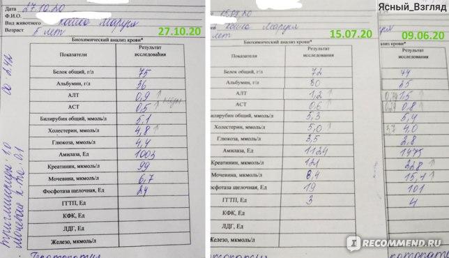 Услуги ветклиник  Биохимический анализ крови у кошек и собак фото