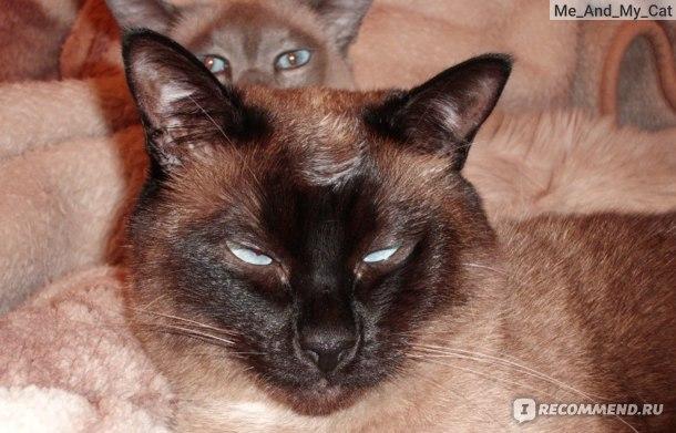 Моня готовится ко сну, прическа не очень!