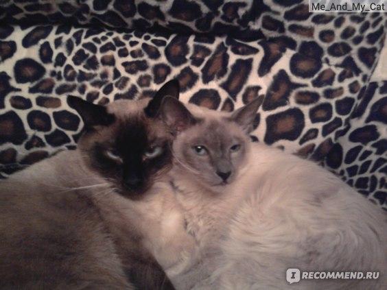 Моня и Чита вместе.