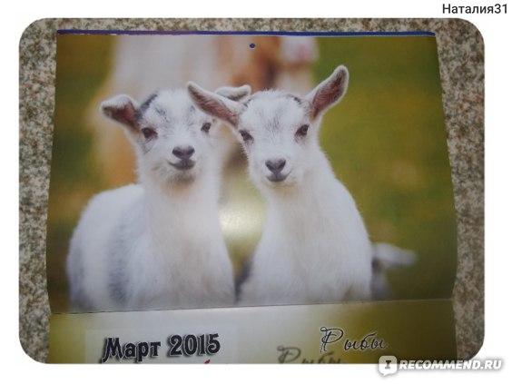 "Календарь ОСЭ ""Год козы"" фото"