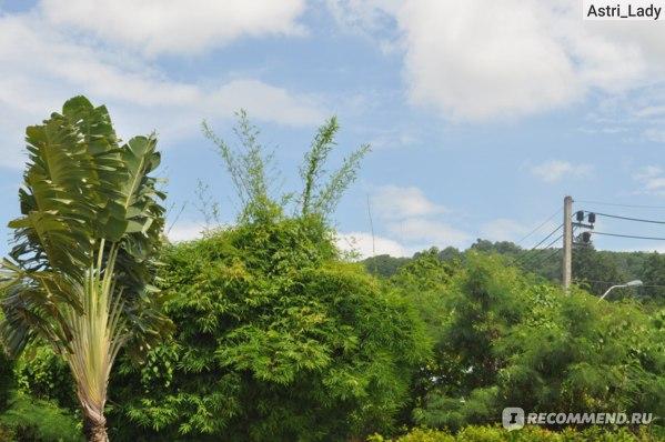 Centara Karon Resort Phuket  4*, Таиланд, Пхукет фото