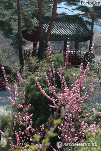 Национальные парки и буддийские храмы - лучшие достопримечательности Кореи