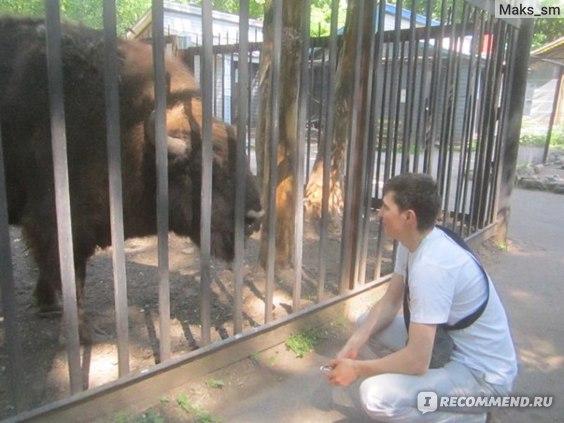 Витебский зоопарк, Витебск фото