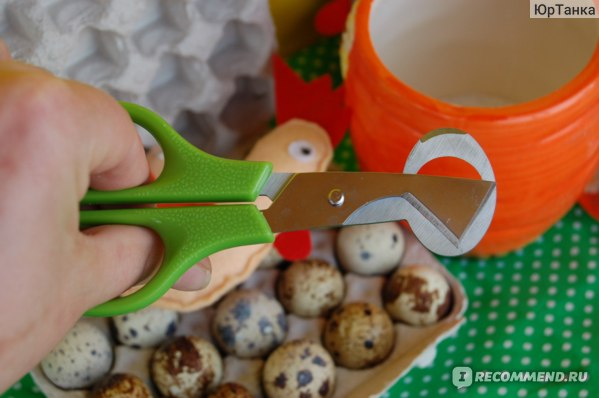 Ножницы для перепелиных яиц AliExpress 2017 Kitchen Tool Quail Egg shells Scissors Cracker Opener Cigar Cutter Stainless Steel Blade Tool Household Tool Scissors фото