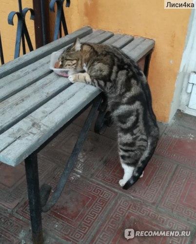 Стерилизация и кастрация кошек фото