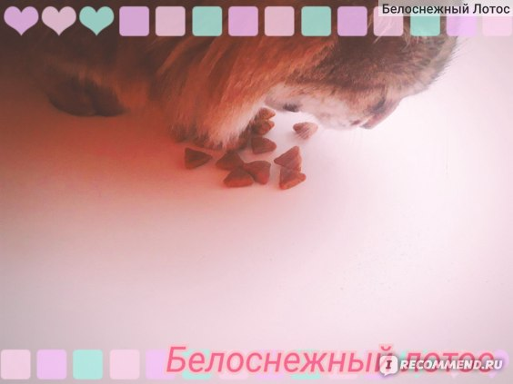 Корм для кошек Nutram  FelinePerfection фото