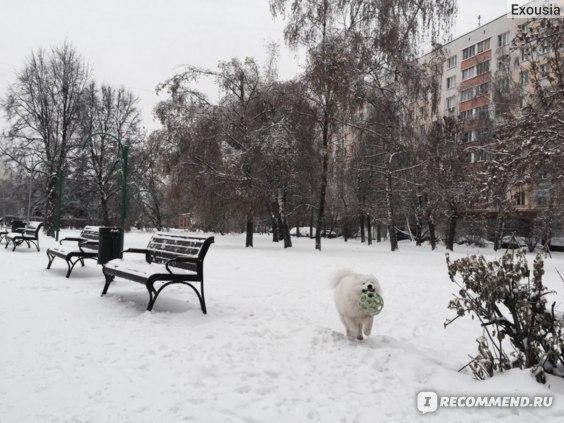 Зимние прогулки))