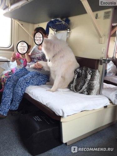 В поезде липнем к соседям) Ахах)