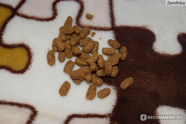 Корм для собак Purina ONE® Моя Собака...Чувствительная фото