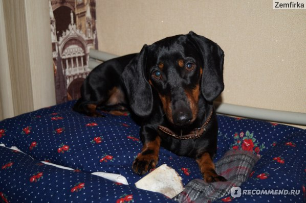 Корм для собак Purina Pro Plan Adult small & mini DIGESTIVE comfort фото