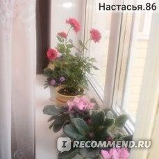 Розы комнатные фото