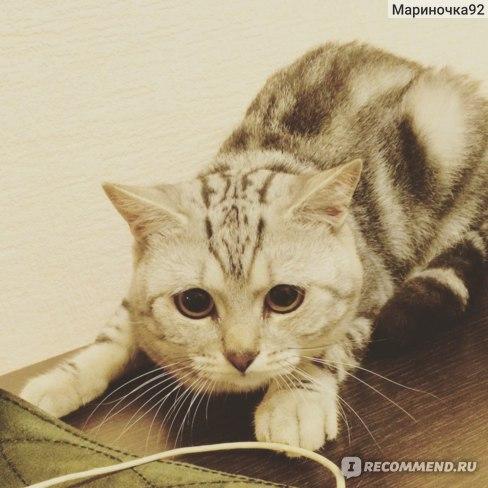Корм для кошек Royal Canin British Shorthair для Британцев фото
