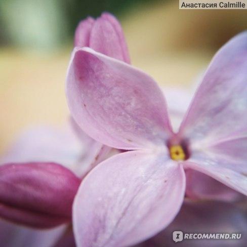 Объектив Aliexpress 3 In 1 Universal Clip Mobile Phone Lens Fish Eye + Macro + Wide Angle фото