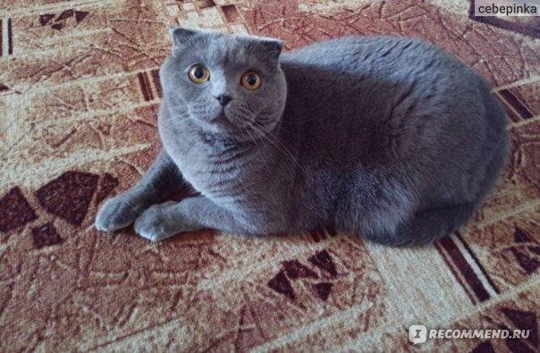 Корм для кошек Probalance IMMUNO PROTECTION с курицей и индейкой фото
