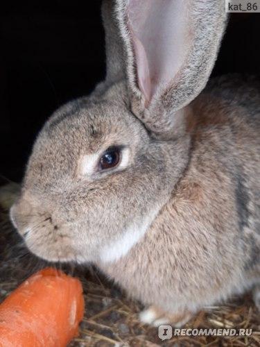 Домашние кролики фото
