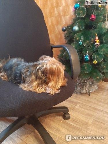 Стерилизация и кастрация собак фото