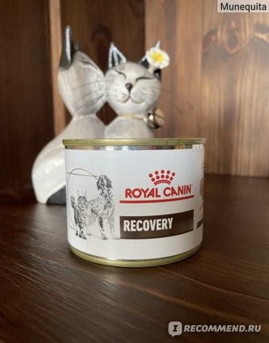 корм Royal canin Recovery