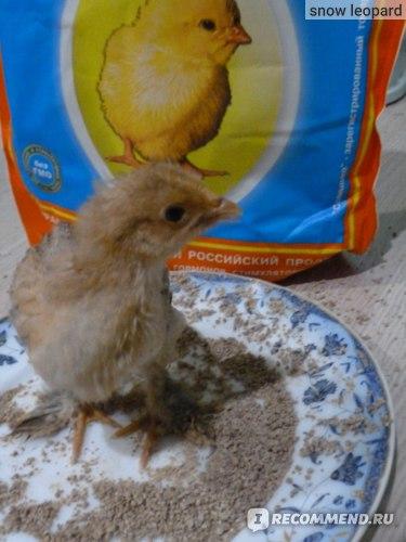 Полнорационный корм Солнышко для цыплят, индюшат, цесарят, утят, гусят c первых дней жизни. фото