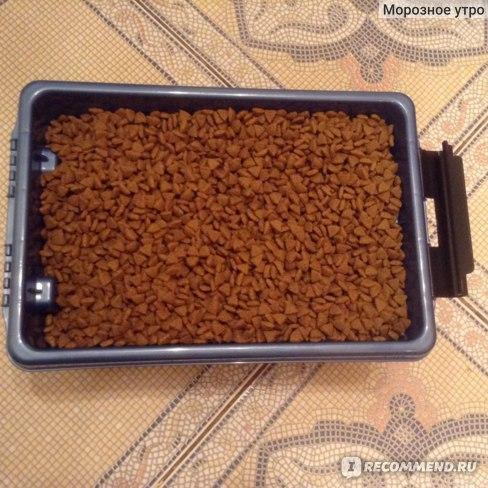 Сухой корм Purina Pro Plan Small & Mini Adult Sensitive Digestion Lamb & Rice / Пурина Про План для взрослых собак мелких и карликовых пород с чувствительным Пищеварением Ягнёнок с рисом фото