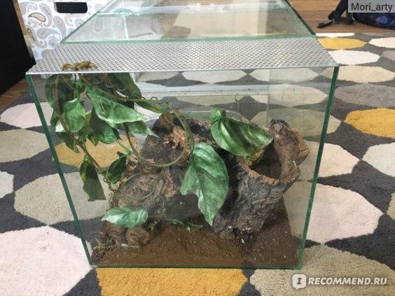 Геккон токи (лат. Gekko gecko) фото