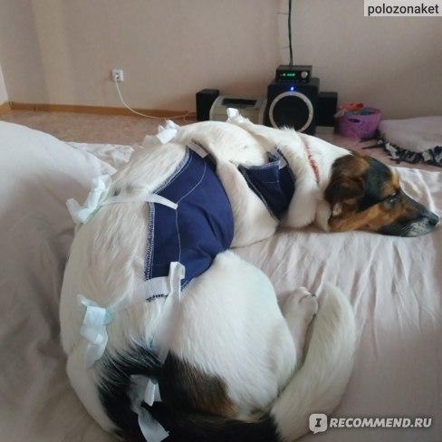 Собака Похудела После Стерилизации. Как правильно лечить ожирение у собак?