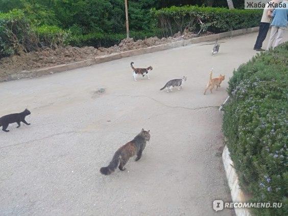кошки санатория им. Кирова