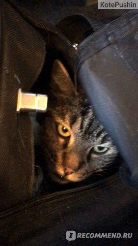 Бибиш, недовольный в сумке-переноске