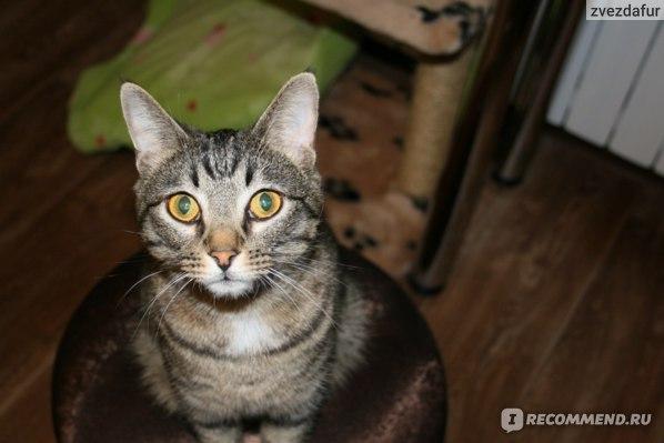 Консервы для котов Feline porta 21 тунец фото