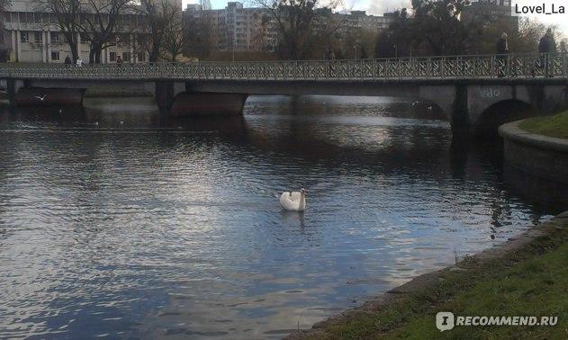 Россия, Калининградская область, Калининград (Кёнигсберг) фото