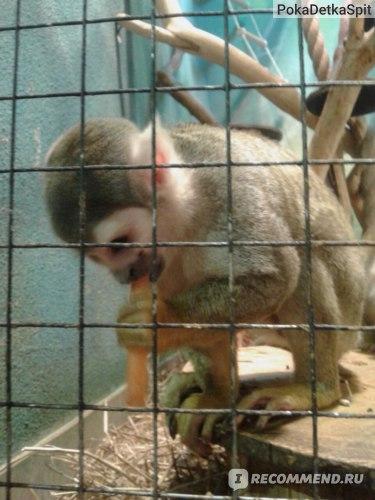 Белый кенгуру, зоопарк. Москва